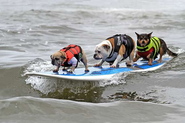 Huntington Beach has the premier dog beach in Southern California. In September it hosts Surf City Surf Dog, which includes a surfing contest for canines.