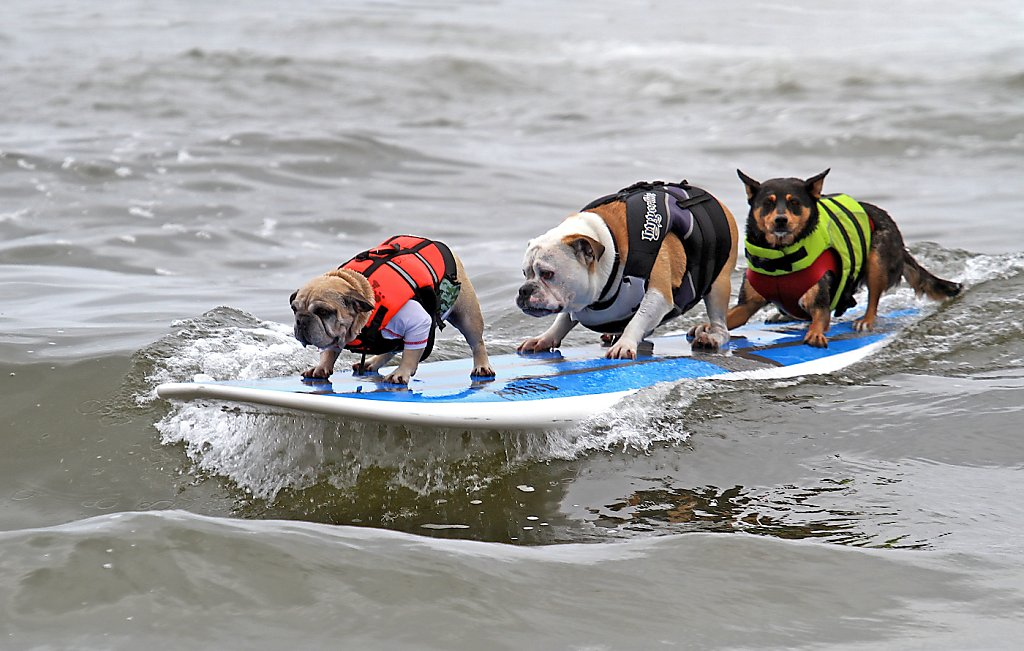 Dog-friendly California destinations - SFGate