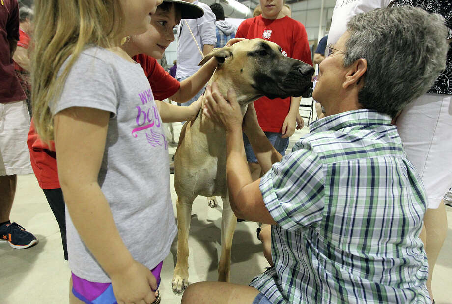 Vanette Stephenson (right) meets face-to-face with Kisses, a Great Dane, at the Meet the Breeds event at the River City Cluster of Dog Shows at the Freeman Coliseum Expo Hall on Saturday, July 14, 2012. The event gives visitors to the show an opportunity to see, touch and interact with various breeds of canines at the show. Photo: Kin Man Hui, San Antonio Express-News / ©2012 San Antonio Express-News