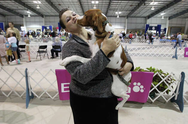 Kaitlyn Sanchez gets a snuggle from her Brittany, Cash, at the Meet the Breeds event at the River City Cluster of Dog Shows at the Freeman Coliseum Expo Hall on Saturday, July 14, 2012. The event gives visitors to the show an opportunity to see, touch and interact with various breeds of canines at the show. Photo: Kin Man Hui, San Antonio Express-News / ©2012 San Antonio Express-News