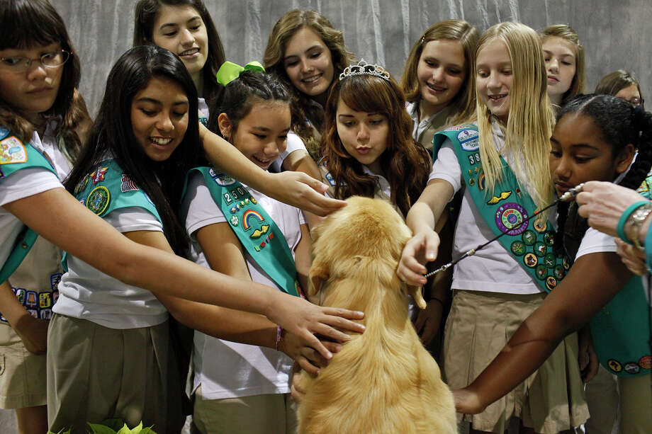 Girl Scouts with Girl Scouts of Southwest Texas pet Grand Champion Bravo Rycroft's A Wrink L N Thyme, a Golden Retriever also known as Chase, as they visit the River City Cluster of Dog Shows at the Freeman Coliseum Expo Hall on Friday, July 13, 2012. Chase is owned by Carol Abernathy of Sweetwater. Photo: Lisa Krantz, San Antonio Express-News / San Antonio Express-News