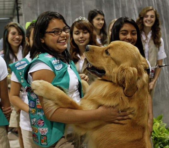 Claudia Contreras, 11, of Eagle Pass holds onto Rycroft's Saracen Full Throttle, also known as Rev, after he jumped in her arms at the River City Cluster of Dog Shows at the Freeman Coliseum Expo Hall on Friday, July 13, 2012. Rev is co-owned by Carol Abernathy of Sweetwater. Photo: Lisa Krantz, San Antonio Express-News / San Antonio Express-News