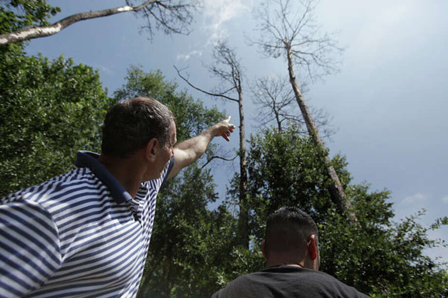 Martin Medina points to the tree struck by lightning Sunday afternoon at La Escondida Soccer Field in north Houston. Photo: Mayra Beltran, . / © 2012 Houston Chronicle