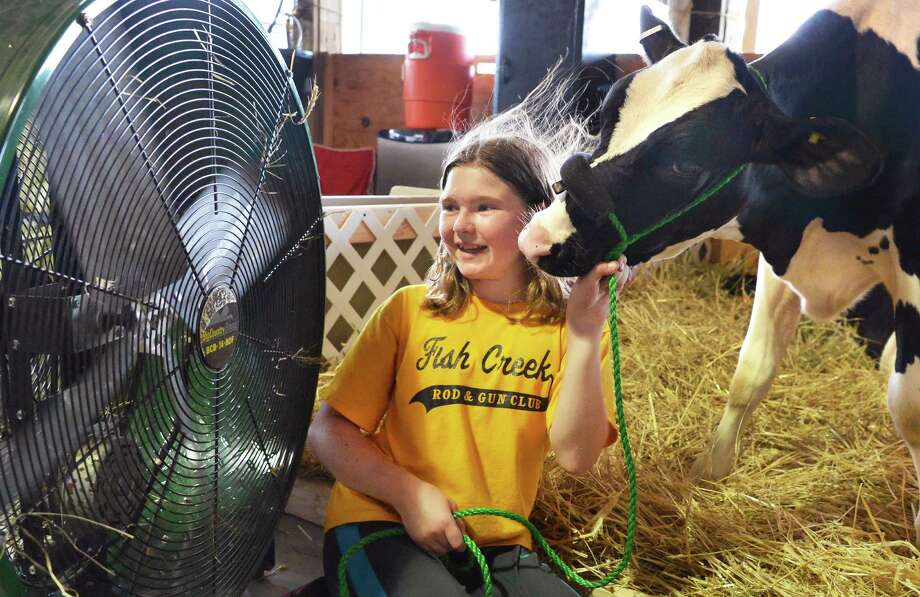 "Ten-year-old Lainey Koval of Stillwater cools off her Holstein calf, ""Eco"" at one of the large fans in the dairy barn at the 171st Saratoga County Fair in Ballston Spa Tuesday July 17, 2012.   (John Carl D'Annibale / Times Union) Photo: John Carl D'Annibale / 00018353A"