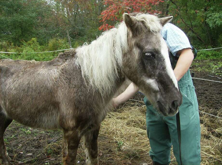 A photograph taken on Sept. 28, 2011, shows conditions of one of the horses at a Greenfield woman's property. (Upstate SPCA)