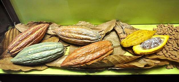 Various forms and stages of cocoa pods are displayed along with harvested beans. Photo: Christine Delsol, Special To SFGate
