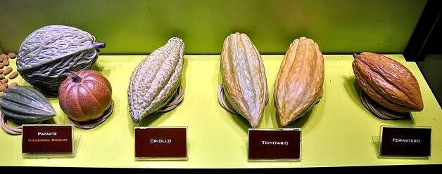 Four different kinds of cacao pods