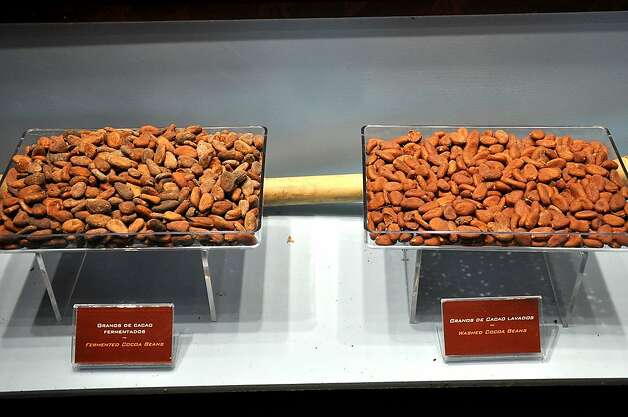 Fermented cocoa beans and freshly washed beans are displayed side by side. Photo: Christine Delsol, Special To SFGate