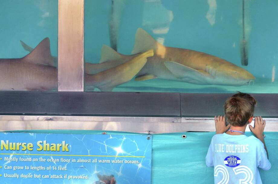 Six-year-old Isaac Coffin of Saratoga Springs gets a close-up look at sharks during the Haai Inc., Shark Encounter show at the 171st Saratoga County Fair in Ballston Spa Tuesday July 17, 2012.   (John Carl D'Annibale / Times Union) Photo: John Carl D'Annibale / 00018353A