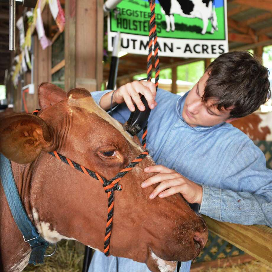 "Jeremy Hommel, 15, of Cambridge gives a cooling shave to his cow ""Irene"" in prepraration for show day this Friday at the dairy barn at the 171st Saratoga County Fair in Ballston Spa Tuesday July 17, 2012.   (John Carl D'Annibale / Times Union) Photo: John Carl D'Annibale / 00018353A"