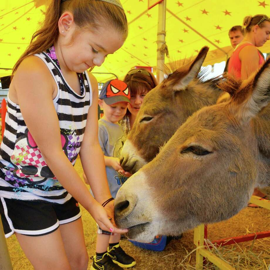 Six-year-old Madison Leffler of Scotia feeds a burro in the Commerford Petting Zoo at the 171st Saratoga County Fair in Ballston Spa Tuesday July 17, 2012.   (John Carl D'Annibale / Times Union) Photo: John Carl D'Annibale / 00018353A