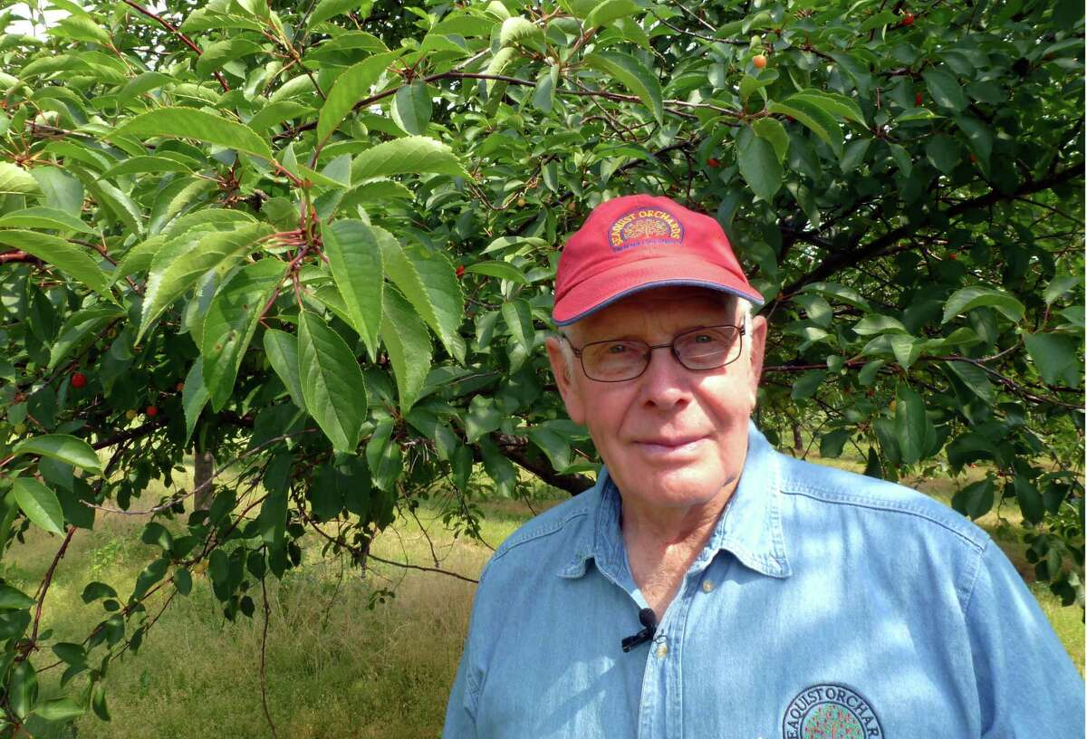 In this June 28, 2012, photo Dale Seaquist, one of the owners of Seaquist Orchards in Sister Bay, Wis., stands in front of one of his 120,000 cherry trees. They only plan to get about 10 percent of a full crop this year after frost got the buds that developed early from a warm winter and spring. (AP Photo/Carrie Antlfinger)