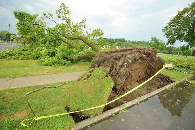 An uprooted tree pulled up buried power lines along Memorial Drive in Rogers Park in Danbury after a strong thunderstorm went through the city on Wednesday, July 18, 2012. Photo: Jason Rearick