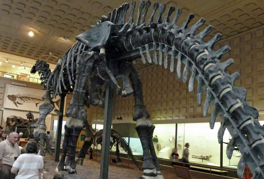 The Yale Peabody Museum of Natural History (and its 70-foot-long Apatosaurus, above) is included in the Connecticut Dino Trail. Photo: Contributed Photo