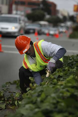 DaLeon Lang, 20, uses shears to cut back the ivy growing along the median on Geary Boulevard as he works on Thursday, July 12, 2012 in San Francisco, Calif. Photo: Lea Suzuki, The Chronicle