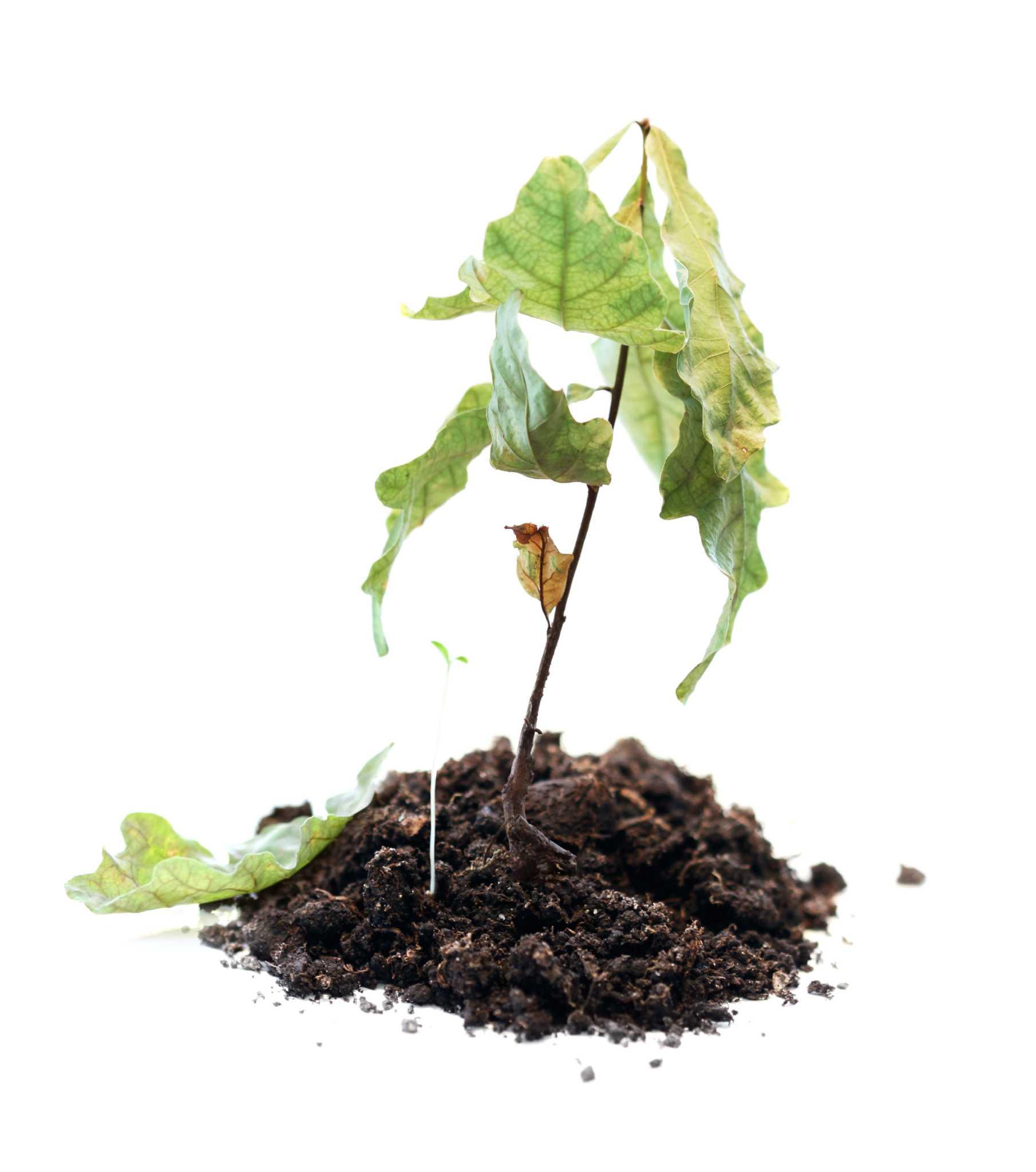Help Plants Survive Heat Wave Times Union