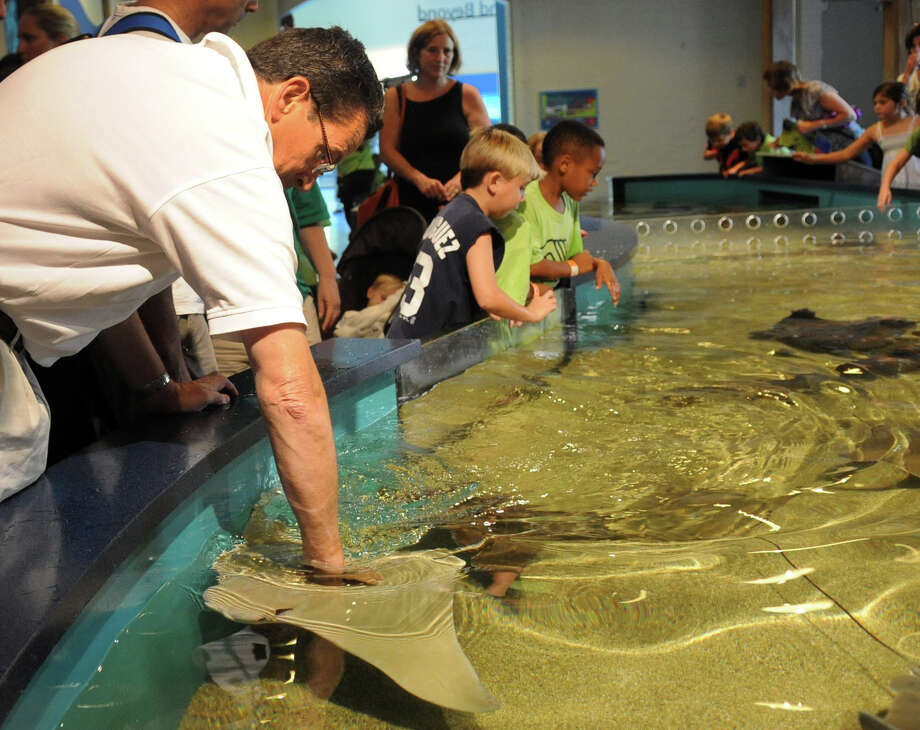 Governor Dannel Malloy pets a stingray as he takes a tour of the Maritime Aquarium in Norwalk to promote state tourism destinations. Photo: Lindsay Niegelberg / Stamford Advocate