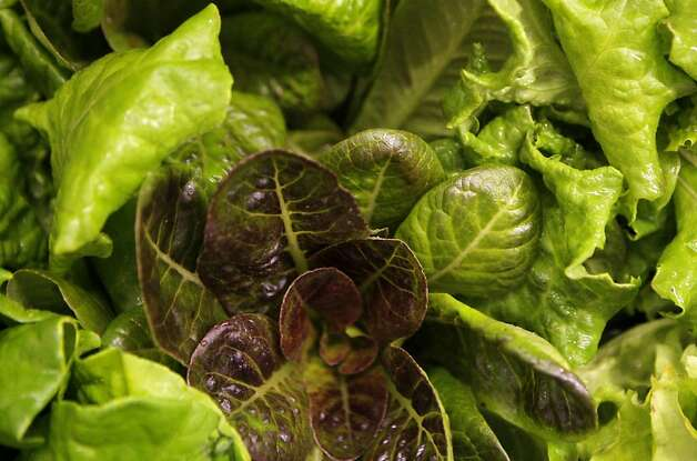 Lettuce is seen at the indoor Ecopia farms in Campbell, Calif. on Monday, July 15, 2012. Photo: Megan Farmer, The Chronicle