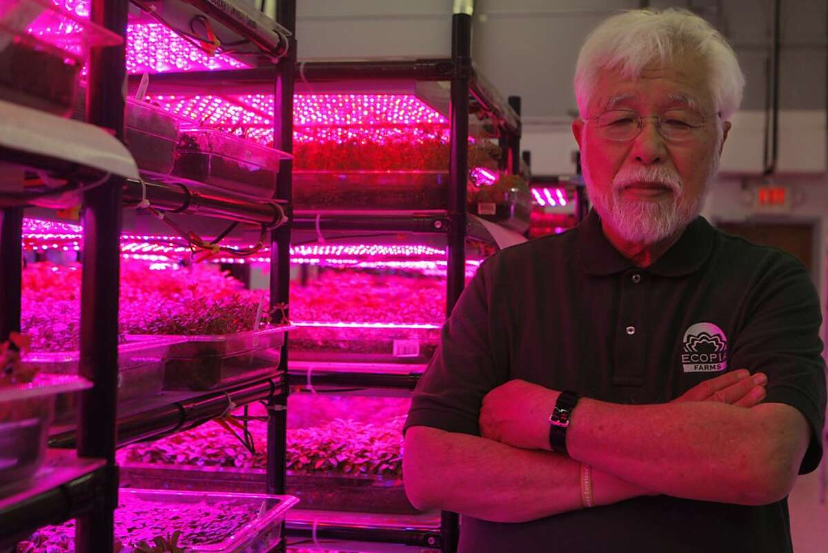 Ko Nishimura is the founder of Ecopia, a state of the art indoor farm that uses LED lighting and organic soil for their specialty produce for chefs, in Campbell, Calif., on Monday, July 16, 2012.