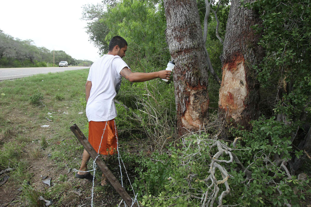 Jose Perez, a rersident of nearby Berclair, Texas, sprinkles holy water where an accident took place Sunday July 22, 2012 killing 13 people after a Ford pickup truck veered off U.S. Highway 59 between Goliad and Beeville, Texas. Perez said he didn't know any of the victims.