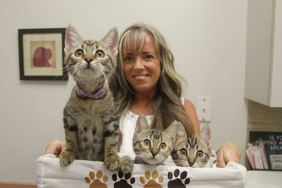 These three kittens Diva, Dorothy and Doogie - along with cats and dogs -are ready for adoption thanks to Pet Hub Animal Rescue and Tammy Dexter, its executive director. The nonprofit works with Pearland's Silverlake Animal Hospital. Photo: Pin Lim / Copyright Pin Lim.