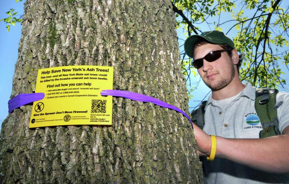 NYS DEC forest pest outreach coordinator Jason Smith attaches a sign to an ash trees in Albany's Corning Preserve Friday May 18, 2012,  as part of the upcoming observance of ?Emerald Ash Borer Awareness Week? attach signs to ash trees to notifying visitors about the risk that the invasive insects pose to the trees.  (John Carl D'Annibale / Times Union) Photo: John Carl D'Annibale / 00017749A