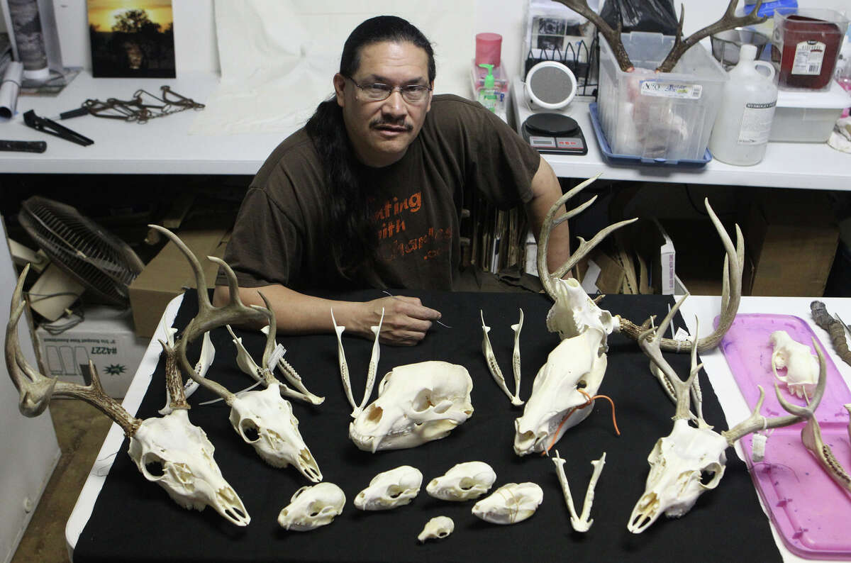 Charles Doria is a hunting guide and also cleans animal skulls by using flesh eating beetles. Doria sells the skulls on e-Bay and to area artists and practices his craft at the Elsmere Art Cooperative. (Thursday March 8, 2012) John Davenport/San Antonio Express-News