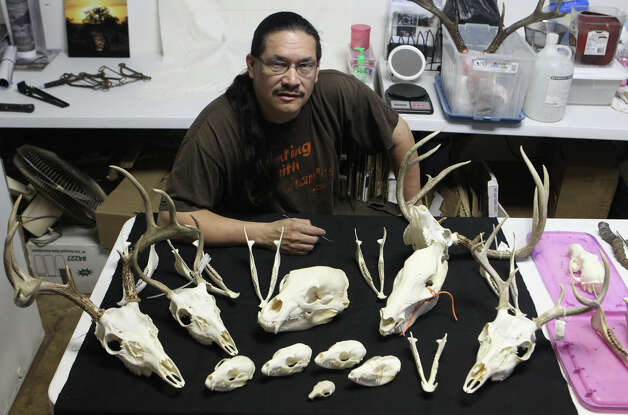 Charles Doria is a hunting guide and also cleans animal skulls by using flesh eating beetles. Doria sells the skulls on e-Bay and to area artists and practices his craft at the Elsmere Art Cooperative. (Thursday March 8, 2012)  John Davenport/San Antonio Express-News Photo: SAN ANTONIO EXPRESS-NEWS