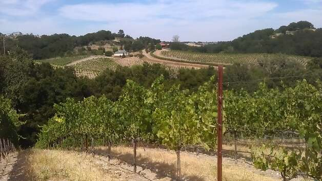 Vines at Denner Vineyards in Paso Robles, facing the well-known James Berry vineyard. Both have highly sought after calcareous soils, the remnants of a one-time seabed.