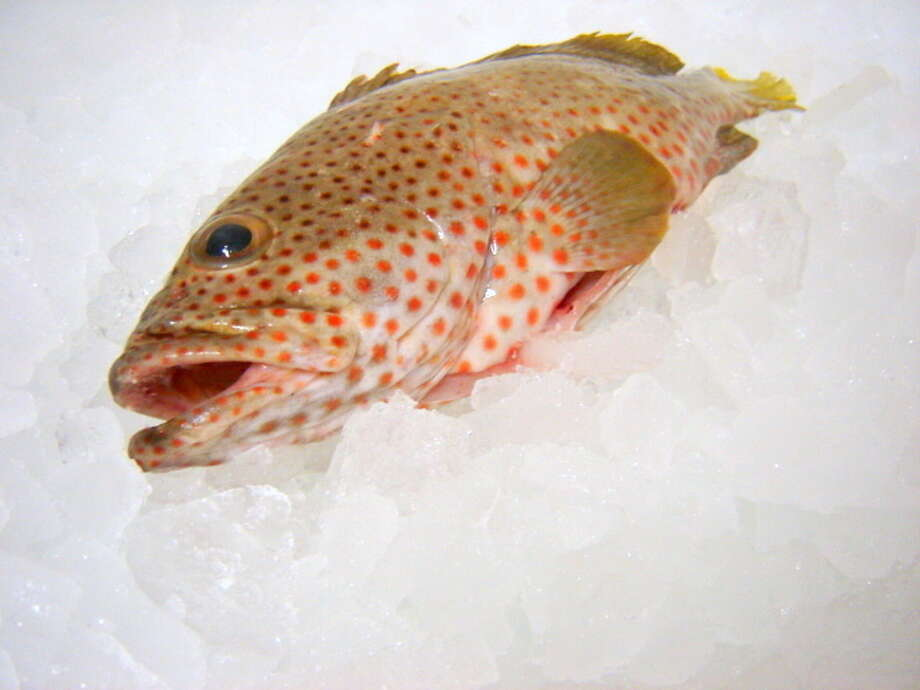 """Fish from Louisiana Foods Total Catch Market, which sells """"bycatch"""" fish primarily from Texas Gulf. Photo: PJ Stoops"""