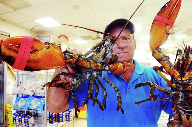 Lobsterman Roger Frate Sr. and two lobsters from Maine in his shop Darien Seafood in Darien, Conn., July 18, 2012.  The state is researching the continuing decline of the state's lobster population after yet another devastating year of diminished catches for the dwindling ranks of commercial lobstermen. Frate points to pesticides used to kill mosquitoes as the cause, he said that other states, like Rhode Island, changed the chemicals used for spraying resulting in a surge in the lobster populations. Photo: Keelin Daly / Stamford Advocate
