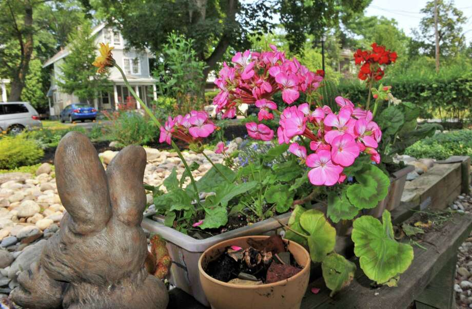 Detail from the garden in the front yard of Pamela Gelgud's Albany home Friday July 13, 2012.   (John Carl D'Annibale / Times Union) Photo: John Carl D'Annibale / 00018433A