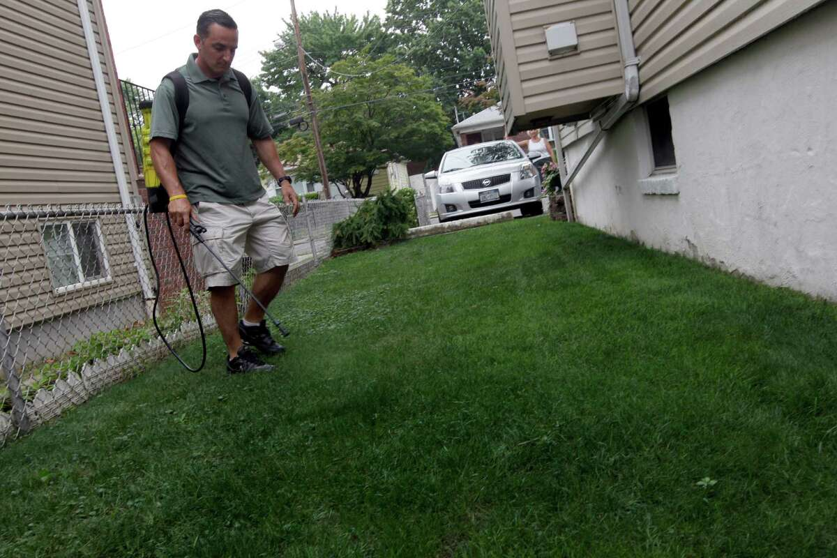 Joseph Perazzo, owner of Grass is Greener Lawn Painting, demonstrates how he spays lawns at a house on the Staten Island borough of New York, Thursday, July 26, 2012. When this summer's nationwide drought turned her prized lawn brown, Terri LoPrimo fought back in a new way: She had it painted green, making her suddenly lush-appearing yard the envy of her neighborhood.
