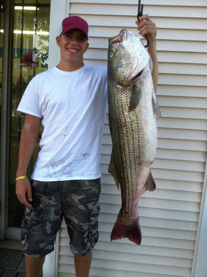 John Curran, 18, of North Branford holds a 47.5-inch, 41-pound striper he caught in the Housatonic River last week. Photo: Contributed Photo