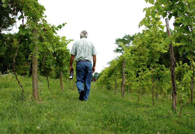 Joe Messina, owner of Amici Vineyards, walks through one of his vineyards Thursday, July 26, 2012 in Valley Falls, N.Y. (Dan Little/Special to the times Union) Photo: Dan Little / Dan Little