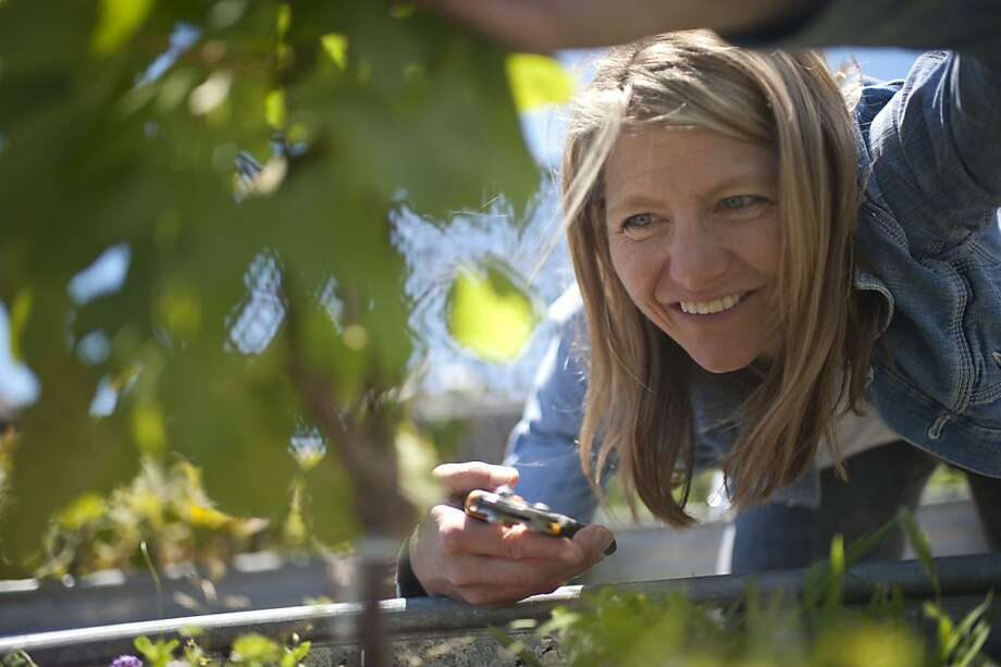 Annie Favia, viticulturist, gets ready to cut back grapevines growing on the Chronicles rooftop on June 26, 2012 in San Francisco, Calif. Photo: Yue Wu, The Chronicle