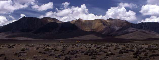 Two guanacos roam the starkly beautiful but desolate Altiplano in Chile's Lauca National Park. (© April Orcutt – all rights reserved) Photo: April Orcutt, For The Express-News / © April Orcutt (all rights reserved)