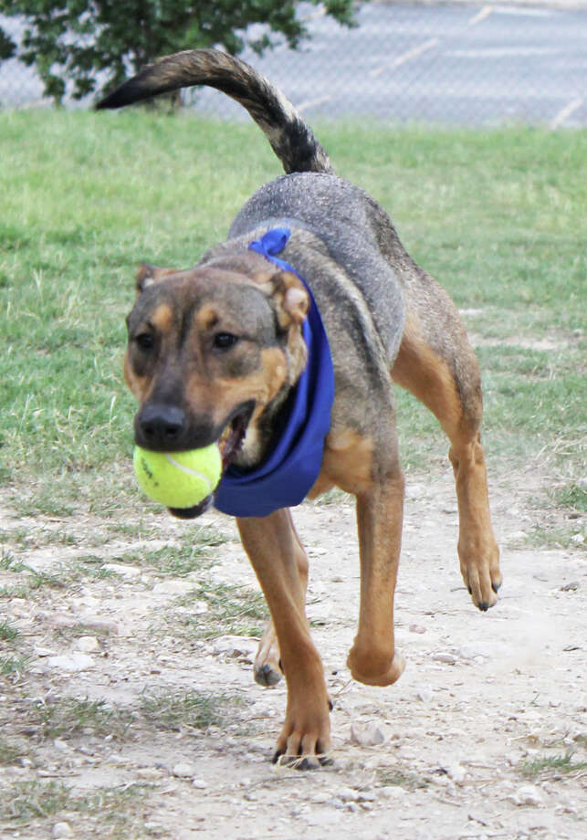 Sierra Photo: San Antonio Humane Society