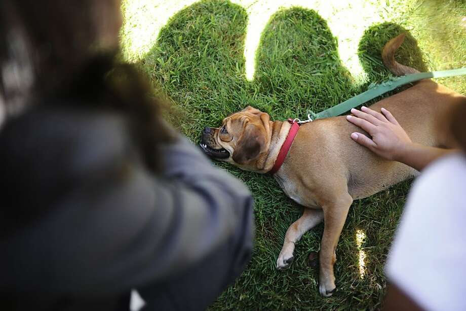 Lala, around one-year old dog, is photographed after the graduation day for some reformed trouble-maker dogs on Tuesday, July 31, 2012 in Redwood City, Calif. Photo: Yue Wu, The Chronicle