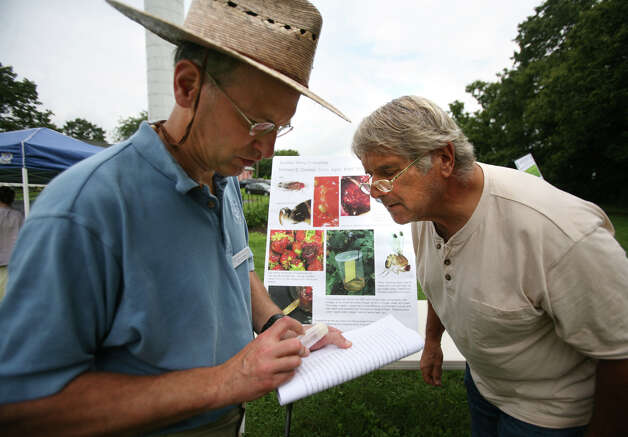 Entomologist Richard Cowles, left, shows samples of the Spotted Wing Drosophila, an invasive fruit fly species, to Steve Sawyer of Preston at the Connecticut Agricultural Station's annual Plant Science Day at Lockwood Farm in Hamden on Wednesday, August 1, 2012. Photo: Brian A. Pounds / Connecticut Post