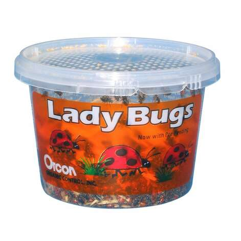 LIVE LADY BUGS: 1,500 for $12? What a deal. Organic gardeners understand why these are for sale on Amazon. (View on Amazon.)
