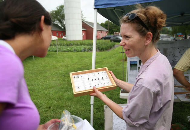 Entomologist Claire Rutledge shows samples of the invasive Emerald Ash Borer beetle to Erin Caruso of Granby at the Connecticut Agricultural Station's annual Plant Science Day at Lockwood Farm in Hamden on Wednesday, August 1, 2012. Photo: Brian A. Pounds / Connecticut Post