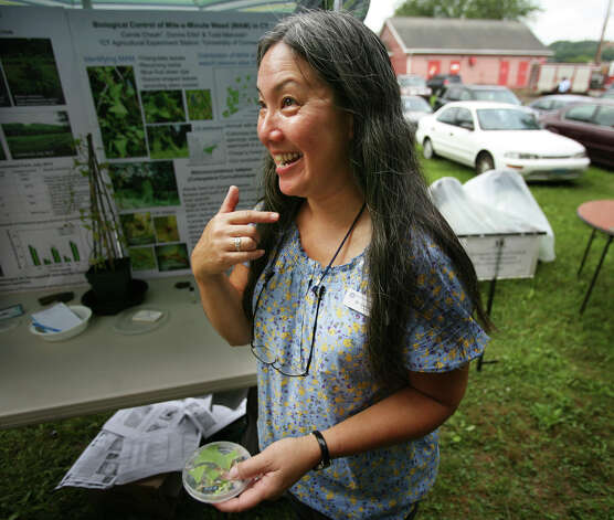 Carole Cheah of the Connecticut Agricultural Experiment Station discusses the invasive plant Mile-a-Minute Weed at the station's annual Plant Science Day at Lockwood Farm in Hamden on Wednesday, August 1, 2012. Photo: Brian A. Pounds / Connecticut Post