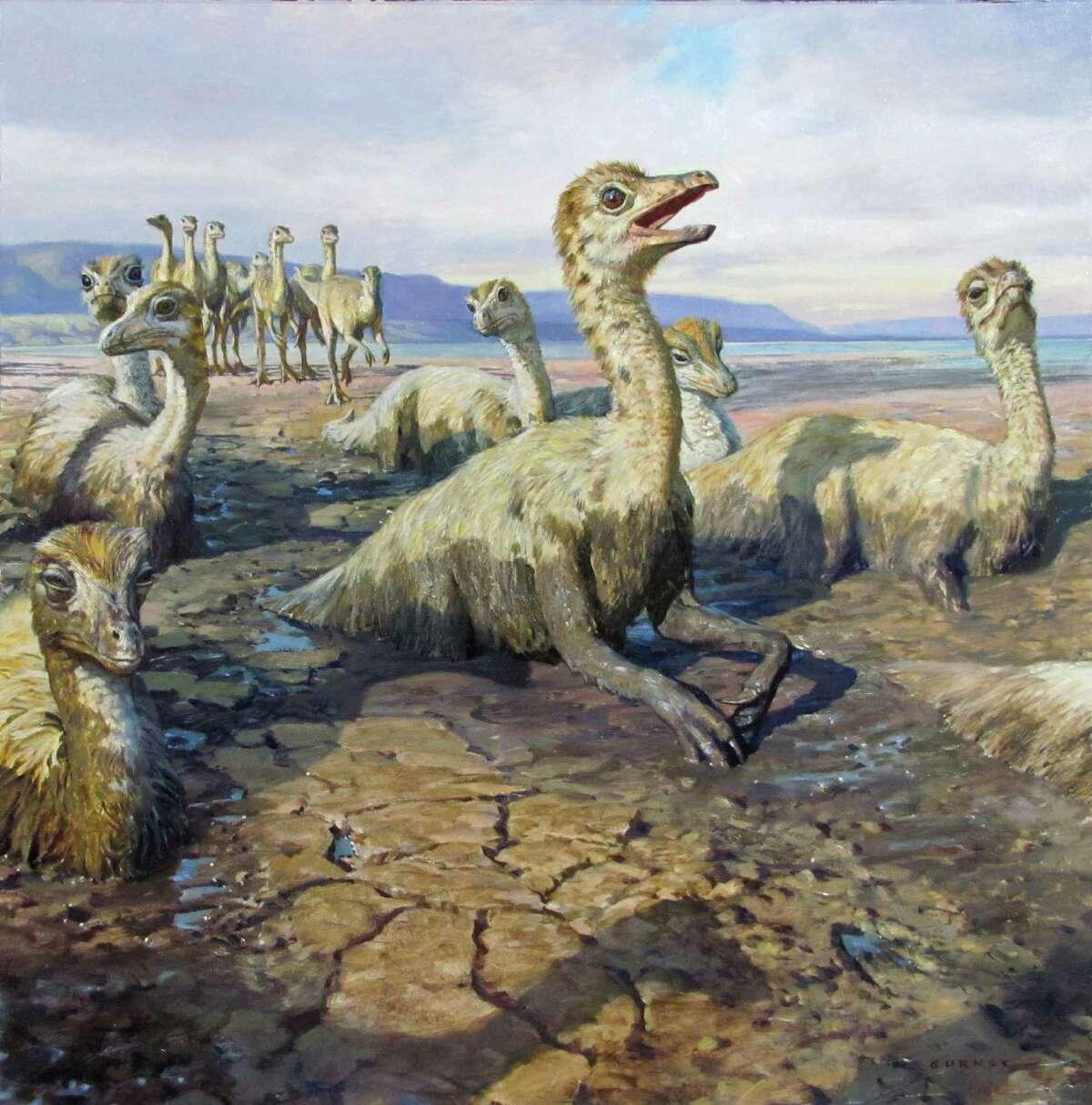 JAMES GURNEY Rhinebeck, New York, USA Sinornithomimus dongi Oil on illustration board, 2011 18 x 18 in (45.7 x 45.7 cm) (Courtesy State Museum)