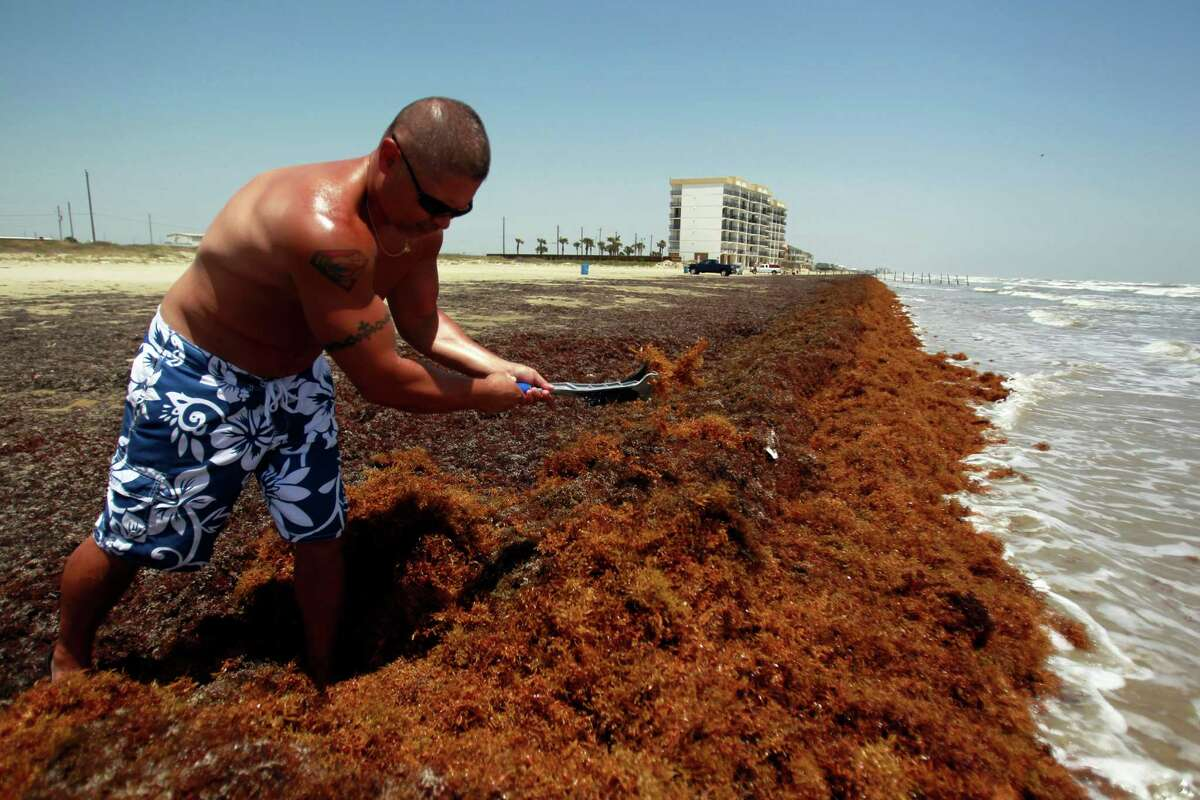 Luis Lopez of Kemah clears a path through seaweed as he and his family spent a day at West Beach in Galveston recently. Seaweed did little to keep beach lovers away this summer.
