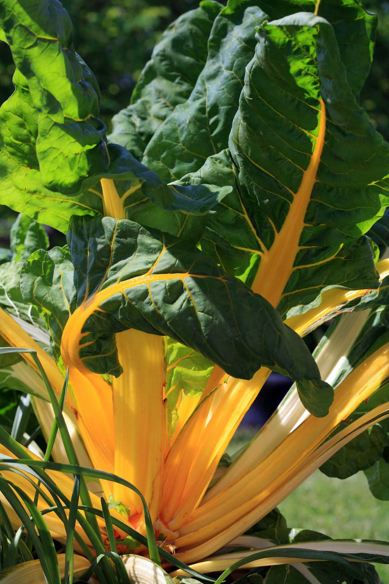 Find Success With Your Fall Vegetables San Antonio