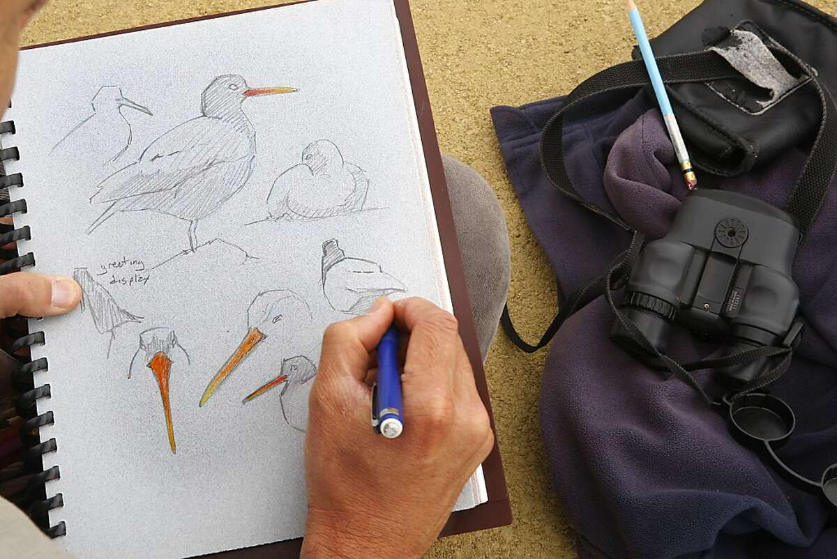 Naturalist John Muir Laws at Heron's Head Park in San Francisco, Calif., drawing American black oyster catchers on Wednesday, July 18, 2012.