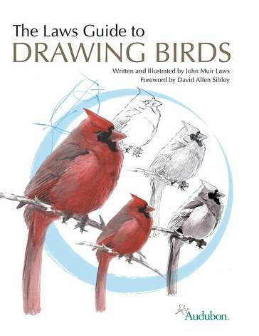 Laws teaches bird illustration in his new book, 'The Laws Guide to Drawing Birds.' Photo: Whiting, John Muir Laws