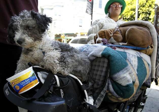 Many of the young people who populate Haight Street have pets, although few have strollers for them like this woman. San Francisco's controversial sit lie law, which makes it against the law to sit or lie on a city sidewalk, is being enforced exclusively in the Haight Ashbury neighborhood. Photo: Brant Ward, The Chronicle