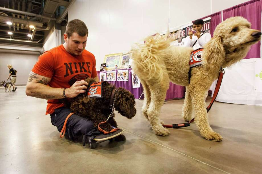 Zac Ruhl plays with two service dogs at the Abilities Expo at Reliant Hall in Houston on Sunday.  For more than three decades, Abilities Expo has succeeded in improving the lives of Americans with disabilities, their families, caregivers and healthcare professionals. Photo: Michael Paulsen, Houston Chronicle / © 2012 Houston Chronicle